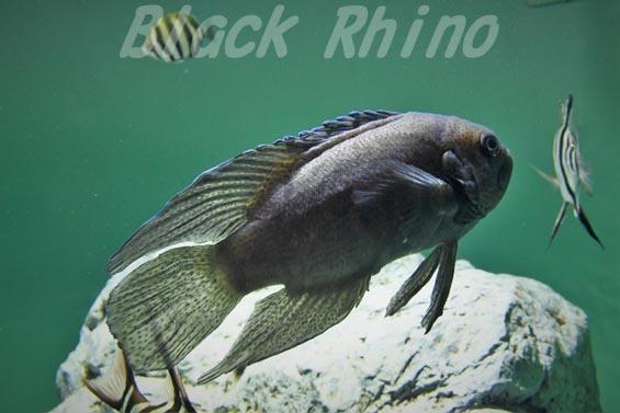 ブルーデビル02 葛西臨海水族園