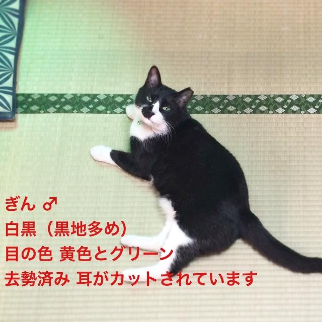 S__117202949.jpg