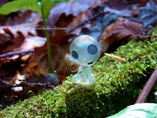 木霊散策とエゾエンゴサク