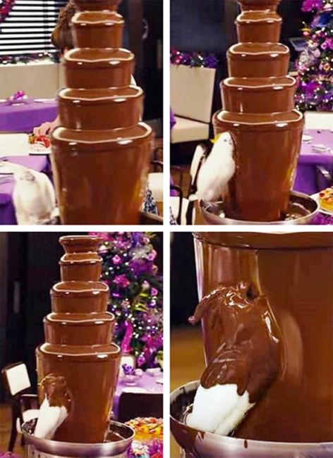 チョコレート・ファウンテンもろともまみれるオウム(映画ジャックとジルの1シーン)