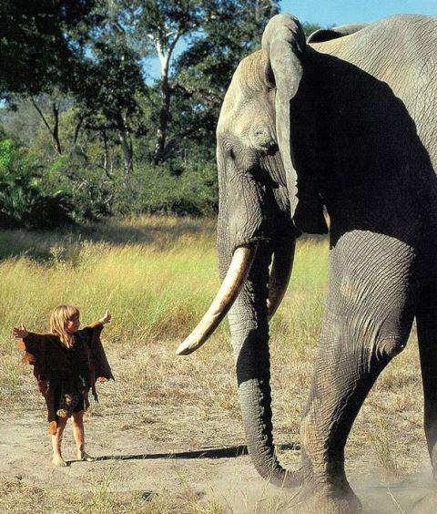 アフリカの野生に育まれた少女、ティッピ