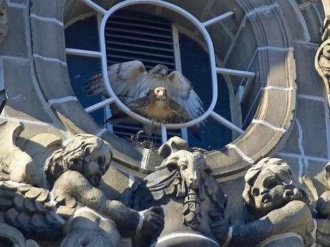 2窓の装飾の像と一体化している鳥