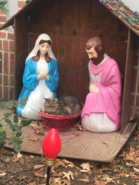 3キリスト降誕シーンに絶賛出演中の猫