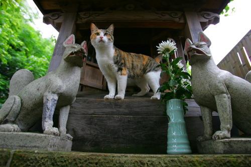 4稲荷社にたたずむ猫