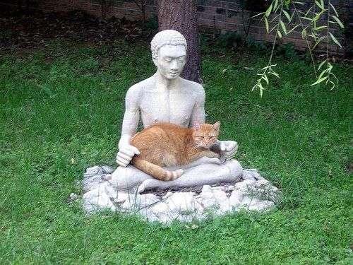 5仏陀のひざ上に乗る猫
