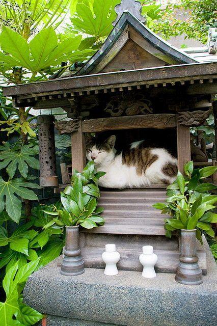 6お社の中で猫がお休み中