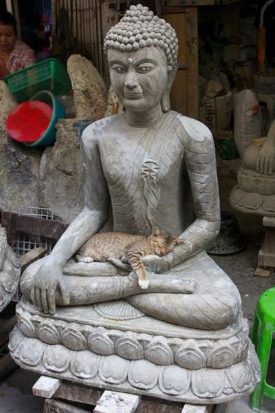 7座仏に抱かれる猫