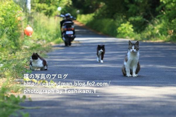IMG_0875s.jpg
