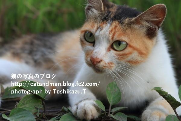 IMG_2225s.jpg