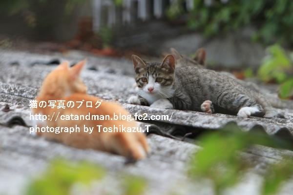 IMG_5151s.jpg