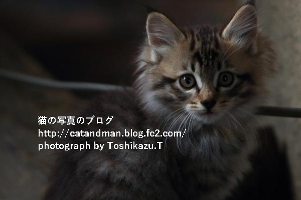 IMG_7275s.jpg