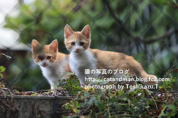 IMG_8281d.jpg