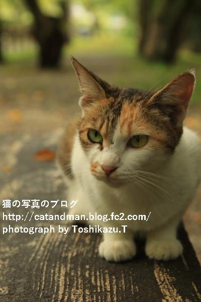 IMG_8598s.jpg