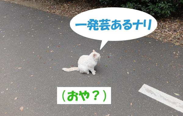 一発芸あるナリ  (おや?)