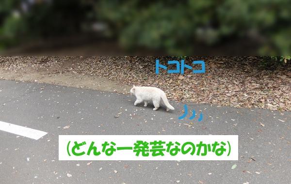 トコトコ  (どんな一発芸なのかな)