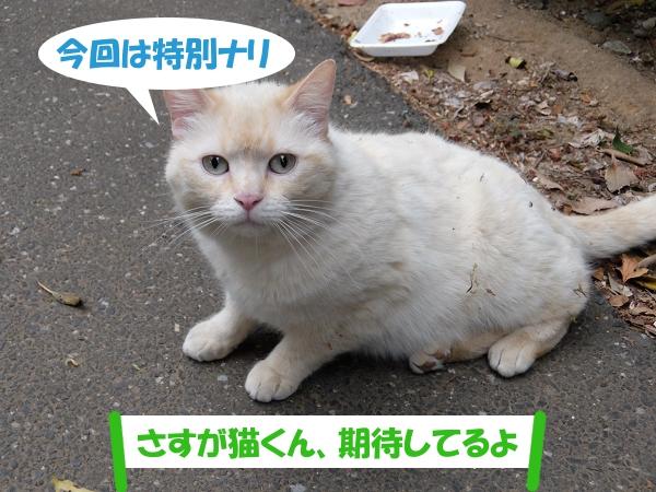 今回は特別ナリ  「さすが猫くん、期待してるよ」