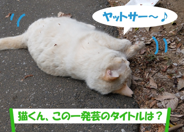 ヤットサー~♪「猫くん、この一発芸のタイトルは?」