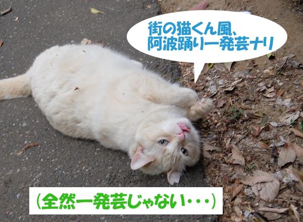 街の猫くん風、阿波踊り一発芸ナリ (全然一発芸じゃない・・・)