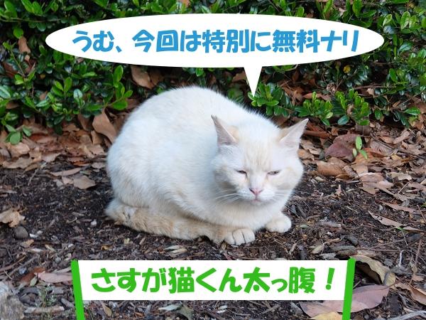 うむ、今回は特別に無料ナリ 「さすが猫くん太っ腹!」