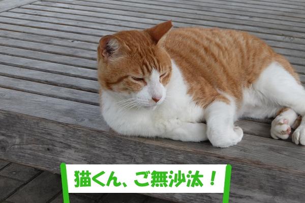 「猫くん、ご無沙汰!」