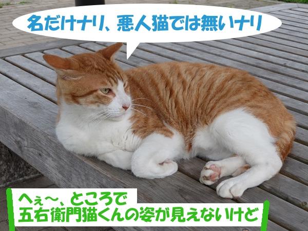 名だけナリ、悪人猫では無いナリ 「へぇ~、五右衛門猫くんの姿が見えないけど」