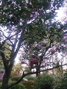 鈴虫寺の珍しい花