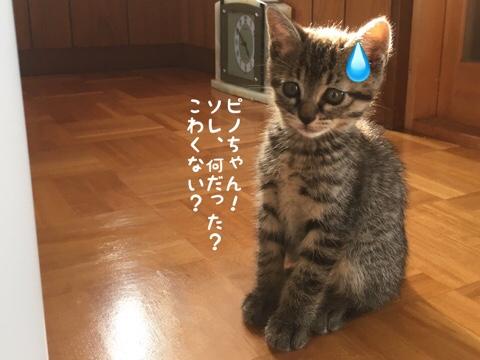 fc2blog_20180607220155eda.jpg