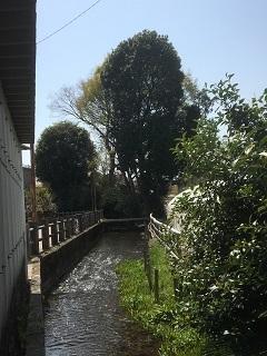 180401-yagawa-20-2.jpg