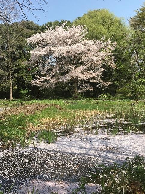 180401-yagawa-33.jpg