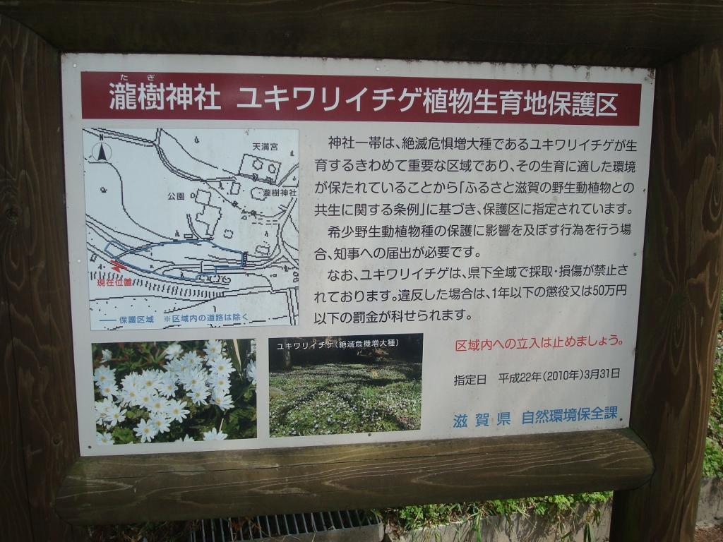 yukiwariichige-1.jpg