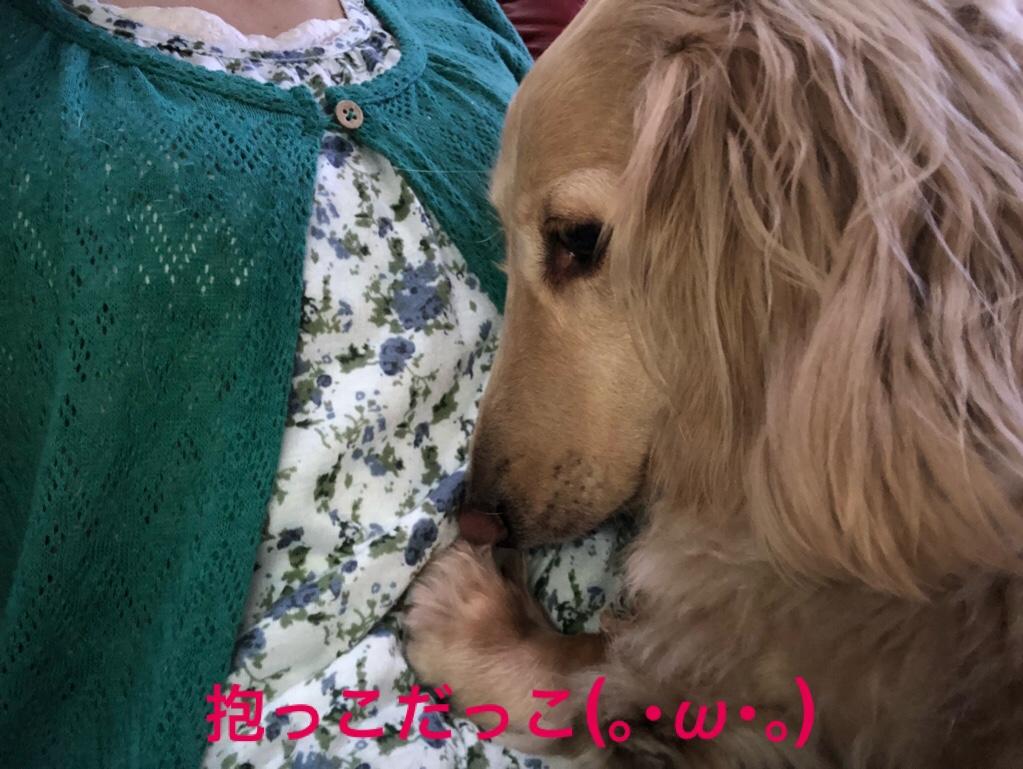 fc2blog_201806231631058a5.jpg