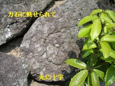 CIMG1107.jpg