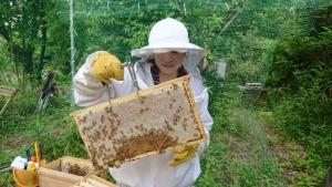 しっかり蜜蓋のかぶった完熟ハチミツです♪
