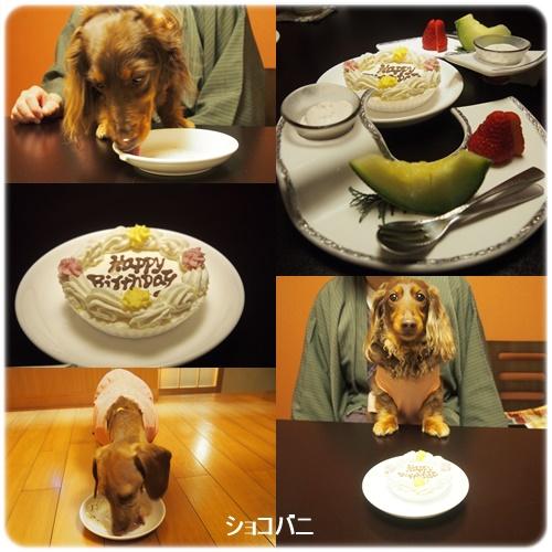 デザートとわんこケーキ