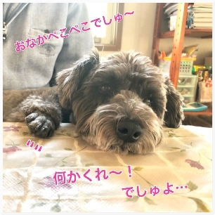 IMG_4682.jpg