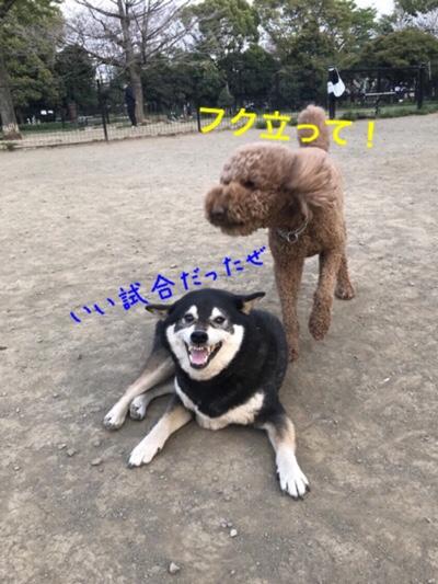 fc2blog_201804032357398e8.jpg