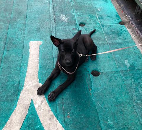 dogsinTaipei_1