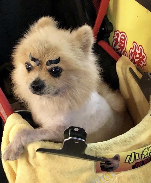 dogsinTaipei_2