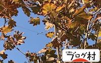 C-kaede_20180509081020cf0.jpg