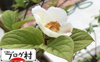 C-sharanoki_20180622075015dc1.jpg