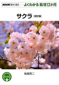G-sakura_201804050732587b4.jpg