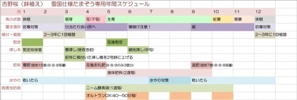 plan_sakura.jpg