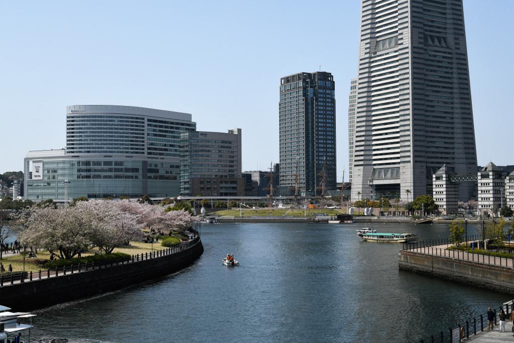 汽車道沿いの桜 2