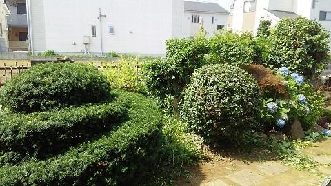 大宮の庭17