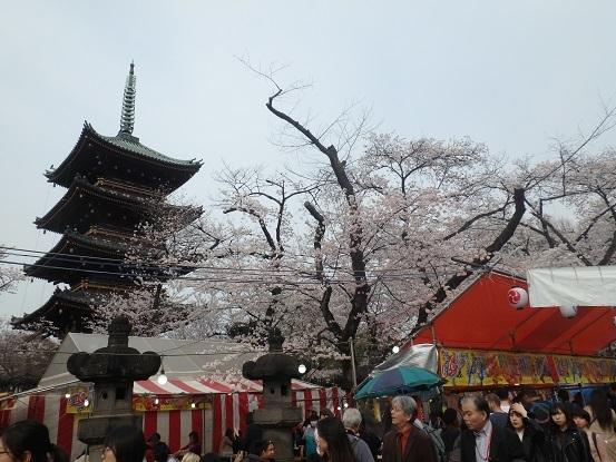 東照宮 桜