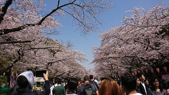 上野 桜 3