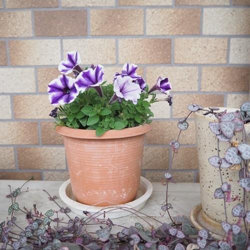 flowerpot180601.jpg
