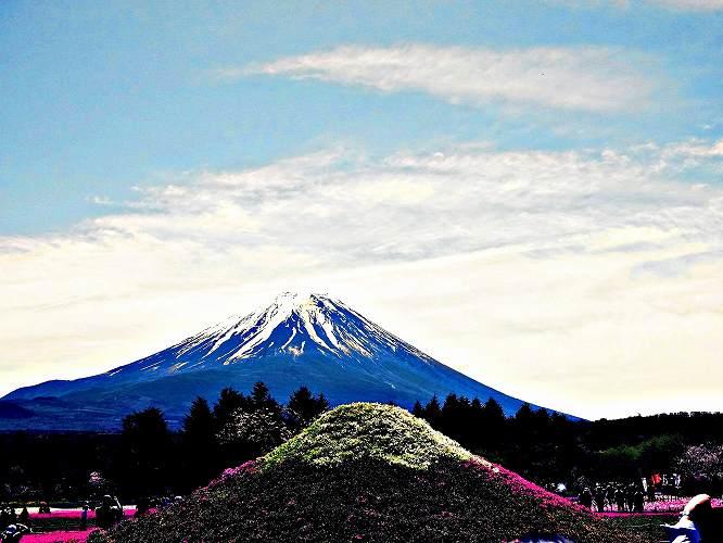 ⑥富士と草ふじ