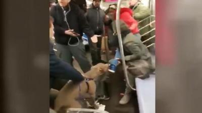 【苦笑】またピットブルだよ・・・地下鉄に乗せるな!