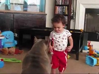 【苦笑】またピットブルだよ・・・今度は子供を襲った!
